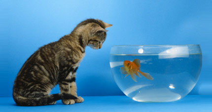 Cat and fish staring at each other.